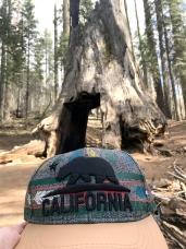 Sequoias10.5