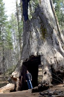 Sequoias11