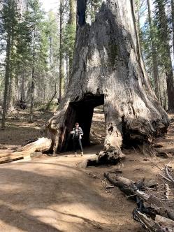 Sequoias12