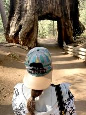 Sequoias14