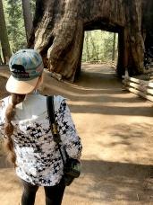 Sequoias15