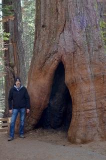 Sequoias16