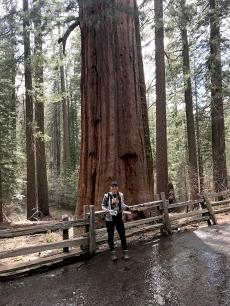 Sequoias7